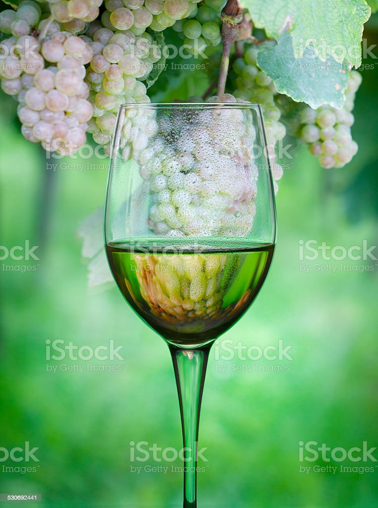 White wine and grapes reflected inside stock photo