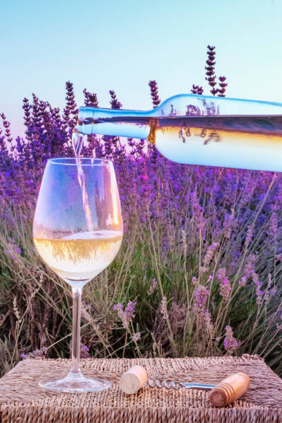 White wine poured into a glass against a lavender field stock photo