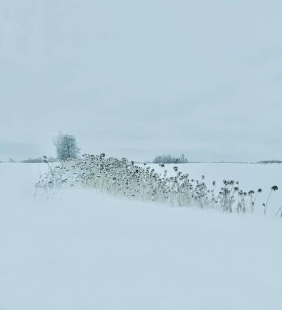 hiver blanc - josianne toubeix photos et images de collection