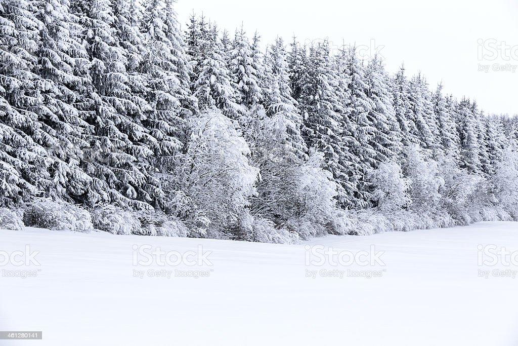 White winter stock photo