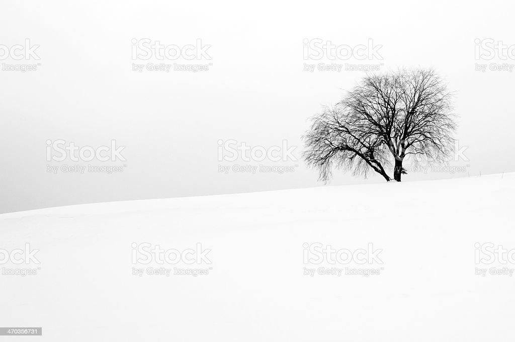 Biały Zima scena z jednego drzewa zbiór zdjęć royalty-free