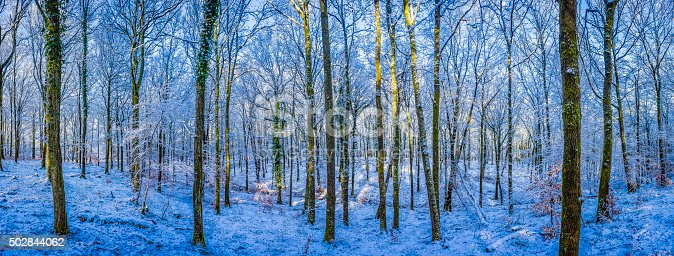 Warm sunlight illuminating the trees in a crisp white winter woodland with frosty canopy shading the snow covered forest floor.  ProPhoto RGB profile for maximum color fidelity and gamut.