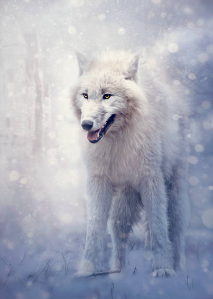 White wolf in the forest stock photo