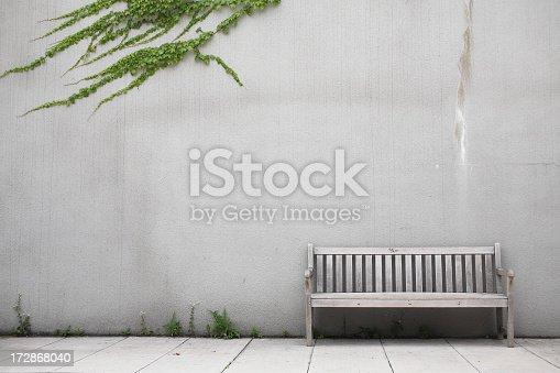 Bench & Ivy in Seonyoodo Park, Korea