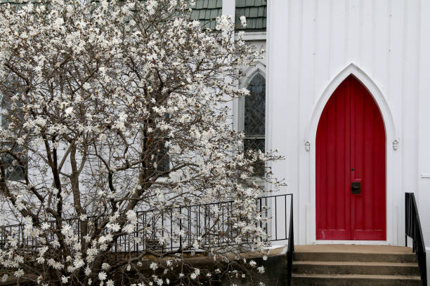 white wood church red arch doors budding dogwood stock photo