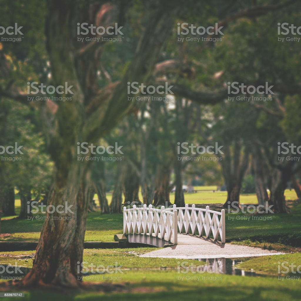 White wooden arched bridge in parkland stock photo