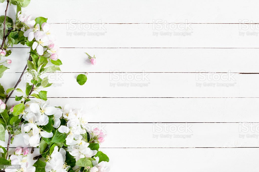 White wooden background with apple blossom flowers stock photo