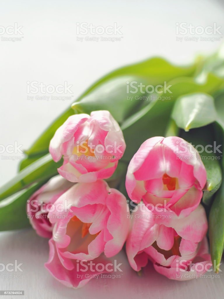 White wooden background with bunch of fresh tulips. Greeting card. royalty-free stock photo