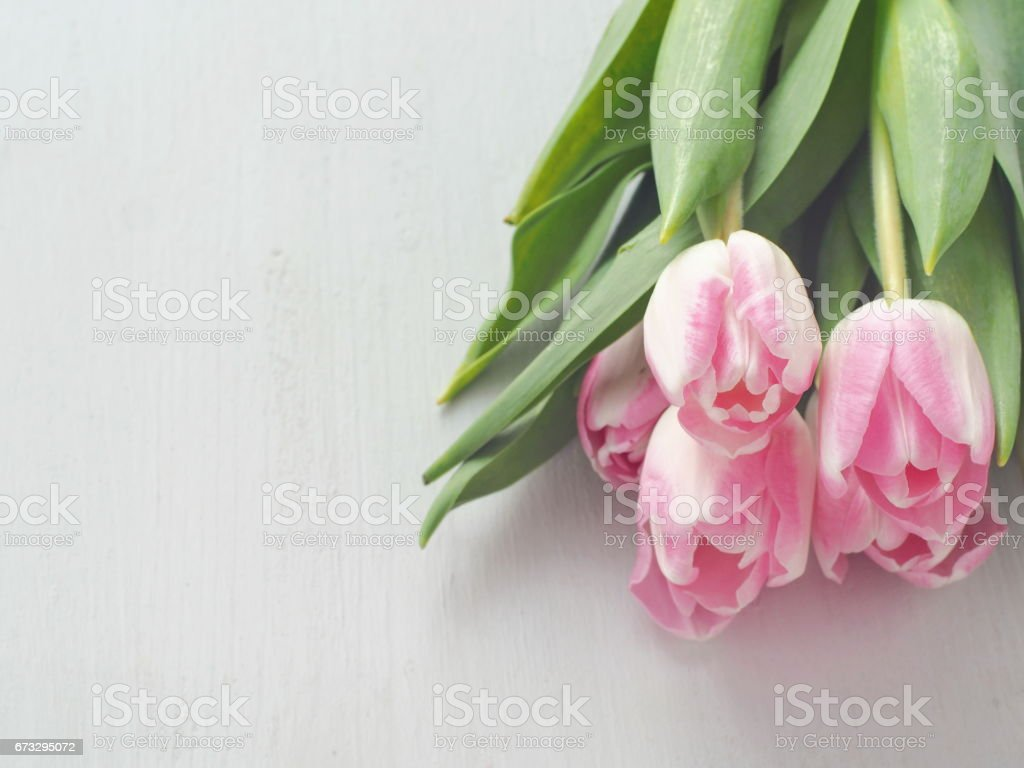 White wooden background with tulips in the upper right corner. Greeting card. royalty-free stock photo
