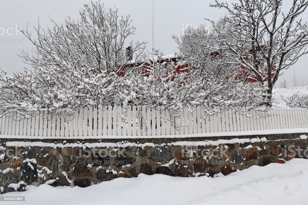 White wooden fence-red cottage rorbu behind trees-heavy snowfall. Hamnoy-Reine-Lofoten-Norway. 0378 stock photo