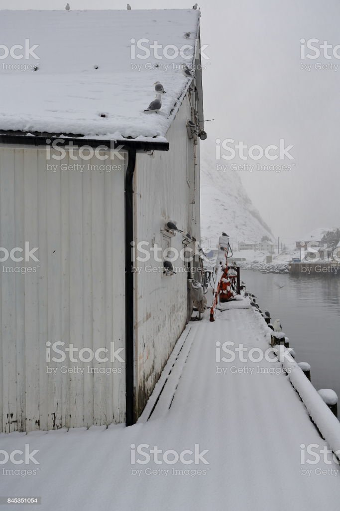 White wooden port warehouse under snowfall-seagulls perched on. Hamnoy-Reine-Lofoten-Norway. 0394 stock photo