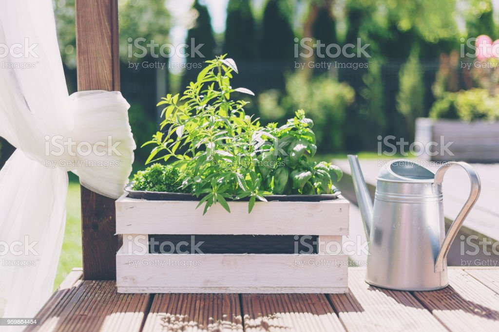 White wooden pot with green herbs on a wooden terrace stock photo