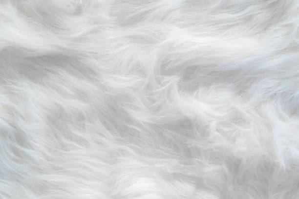 white wool silk feathers background and textured. - pena de pássaro algodão imagens e fotografias de stock