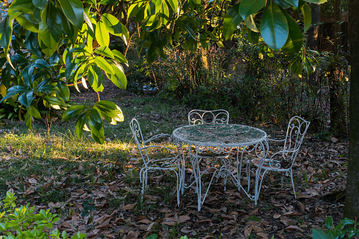 white wrought iron table and two chairs abandoned  under  magnolia