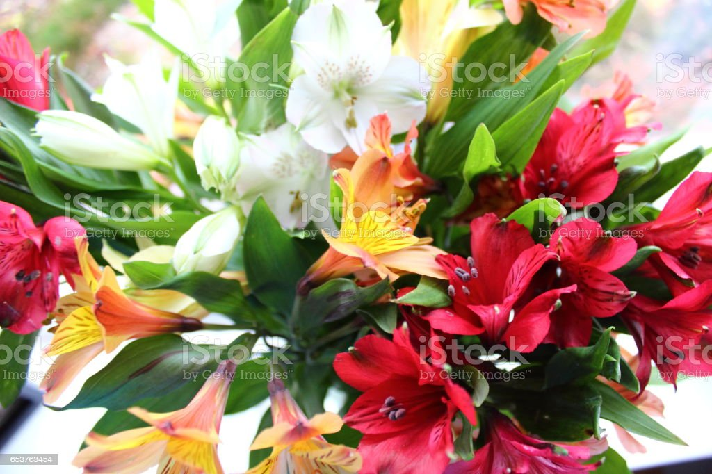 White, Yellow and Red Alstroemeria Flowers stock photo
