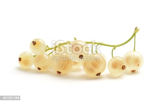 Whitecurrants, Ribes rubrum, on a stalk isolated on a white background.