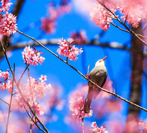 Best Cherry Blossom Candy Bar Cherry Blossom Korea Animal