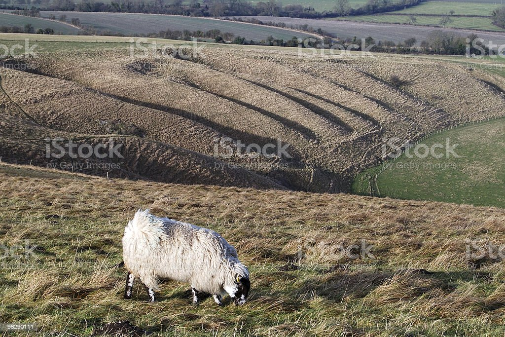 Whitehorse Hill, Oxfordshire, Inghilterra foto stock royalty-free