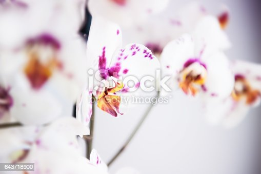 White-pink orchid flower. Macro image, small depth of field
