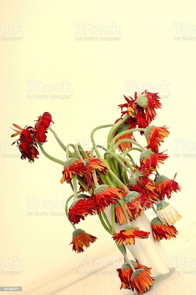 whitered flowers royalty-free stock photo