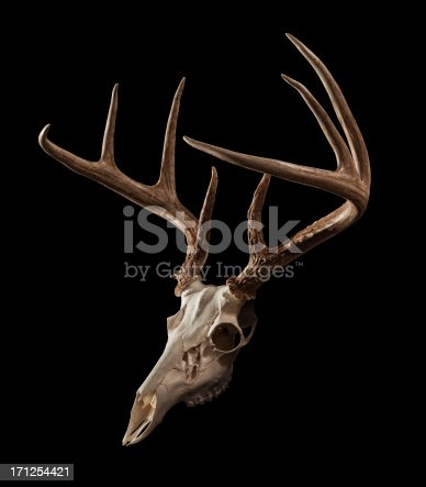 Whitetail Deer skull on a black background, with clipping path included.