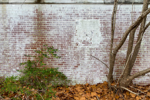 whitewashed brick back garden wall overgrown trees moss stock photo