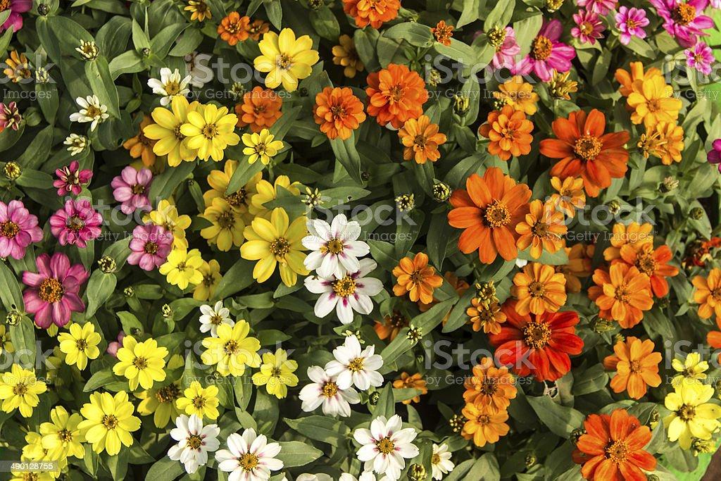White,yellow,orange,pink flowers royalty-free stock photo