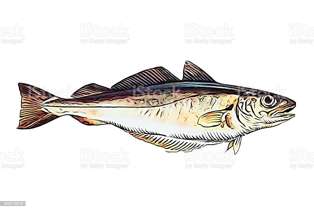 Manipulação da foto de peixe badejo - foto de acervo
