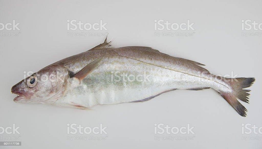 Whiting peixe - foto de acervo