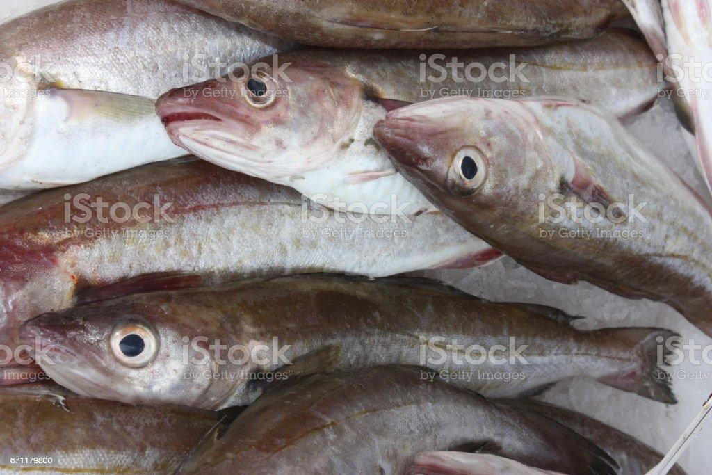 Merlan Poisson de mer - Marché de poissons - Poissonnier - foto de acervo