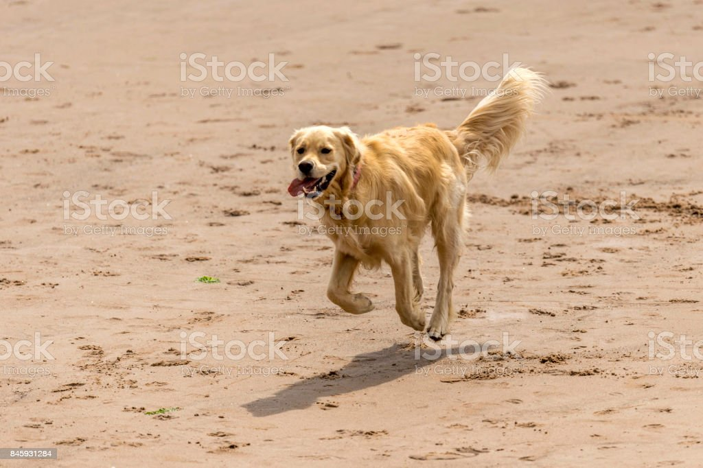 Who Let The Dogs Out Stock Photo Download Image Now Istock