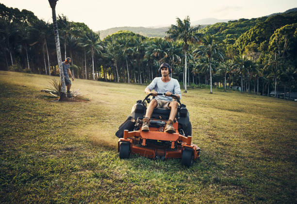 who said mowing the lawn couldn't be fun? - riding lawn mower stock photos and pictures