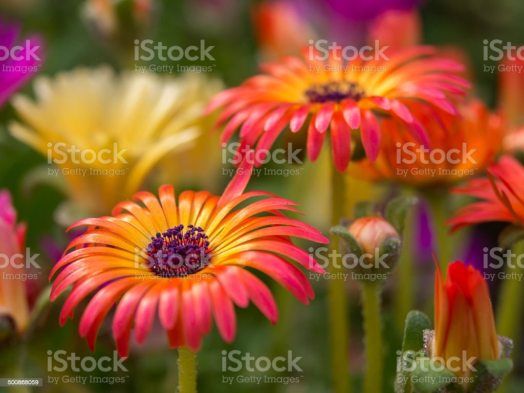 Who says flowers are boring stock photo