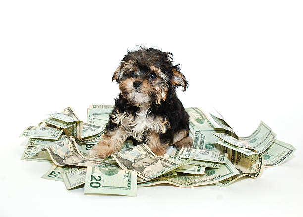 Whoever said you can't buy happiness never bought a puppy. stock photo