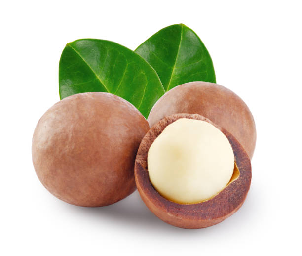 Whole and open australian macadamia nut with the two green leaf Whole and open australian macadamia nut with the two green leaf isolated on white background macadamia nut stock pictures, royalty-free photos & images