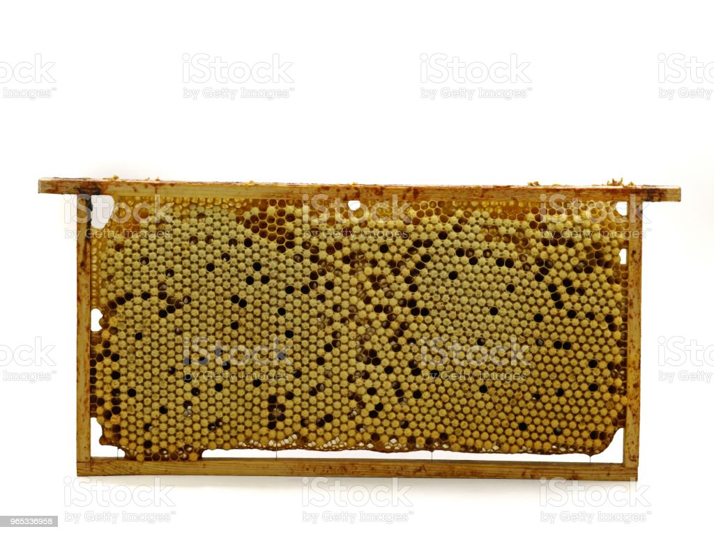 whole bee comb with drone eggs, brood isolated on white background, front view royalty-free stock photo