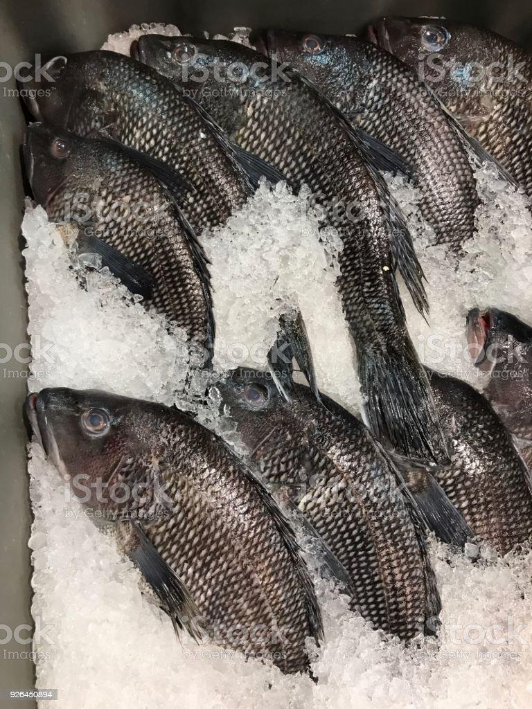Whole Black Sea Bass stock photo