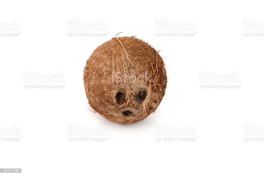 Whole Coconut isolated on pure white background with a comedy or funny face stock photo