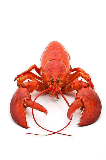 Whole cooked lobster on white background stock photo