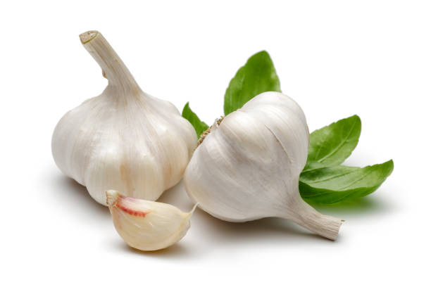 whole garlic and garlic clove with basil leaves - aglio alliacee foto e immagini stock
