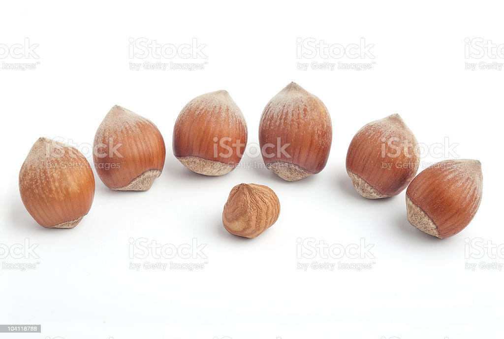 whole hazelnuts listening to kernel royalty-free stock photo