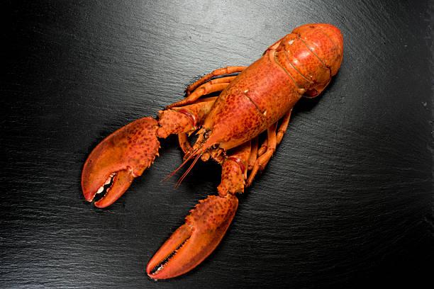 whole lobster on a slate - essensrezepte stock-fotos und bilder