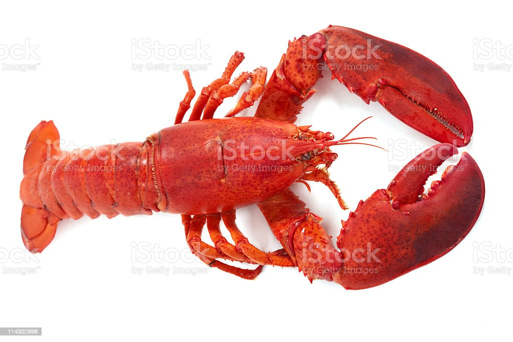 Whole Maine Lobster stock photo