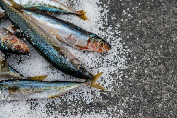 Peixes orgânicos crus inteiros da cavala com o sal do mar que encontra-se em uma superfície lisa - foto de acervo