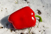 whole red bell pepper in white snow