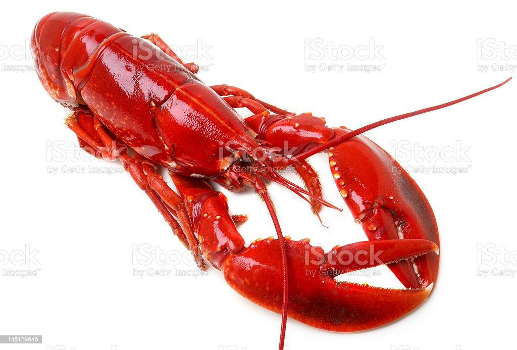 whole red lobster isolated on white background royalty-free stock photo