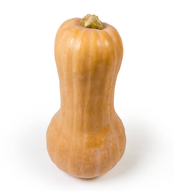 Whole ripe butternut squash stands on a white background stock photo