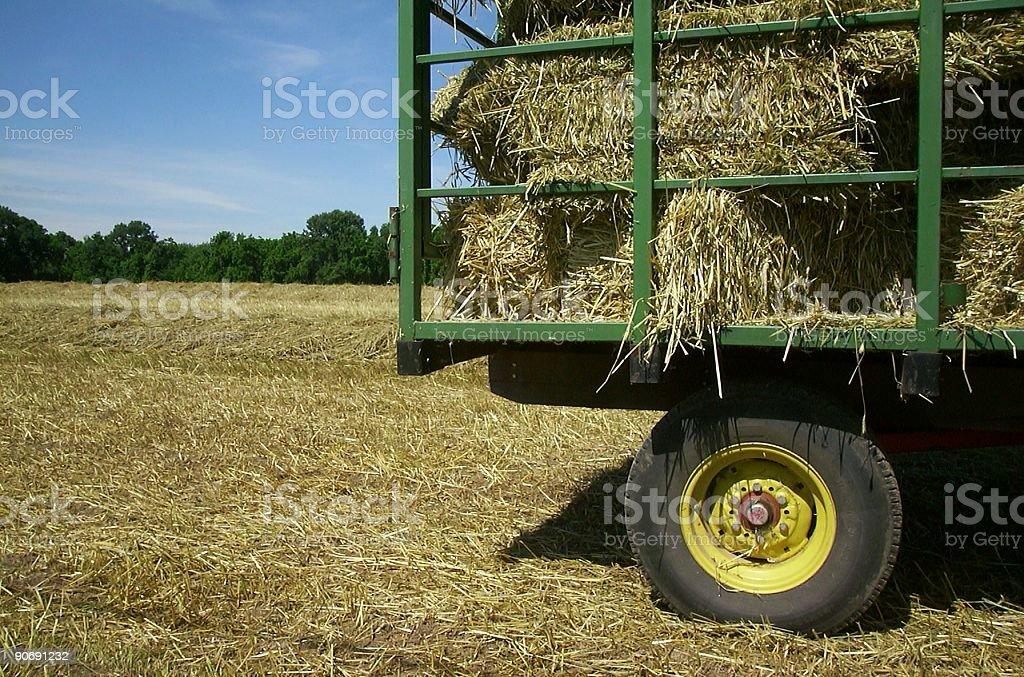 Whole Wheat 2 royalty-free stock photo