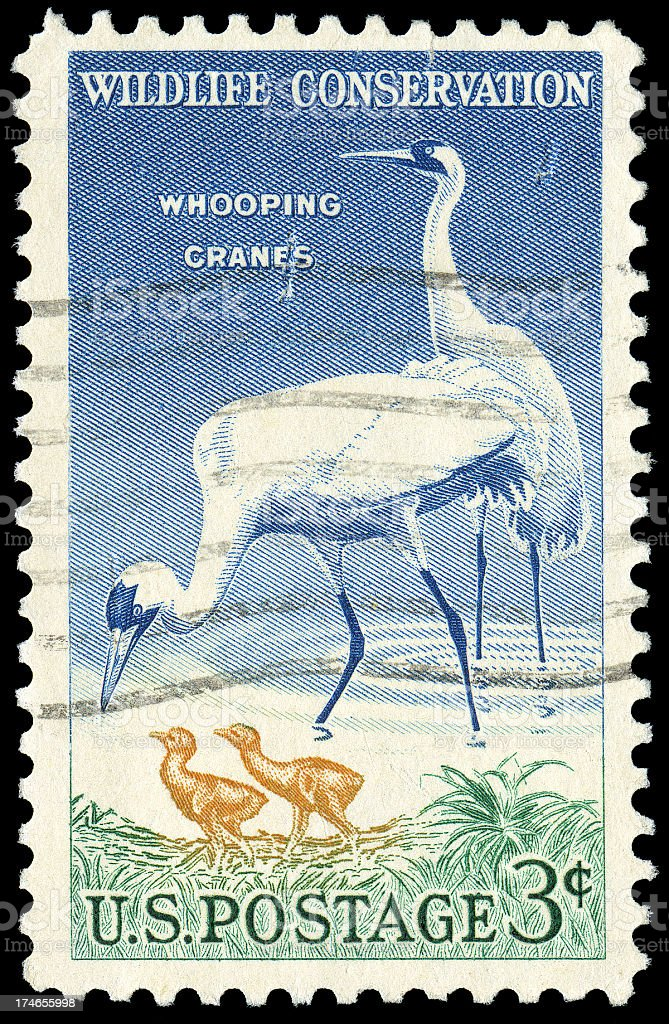 Whooping Crane Wildlife Conservation Stamp royalty-free stock photo