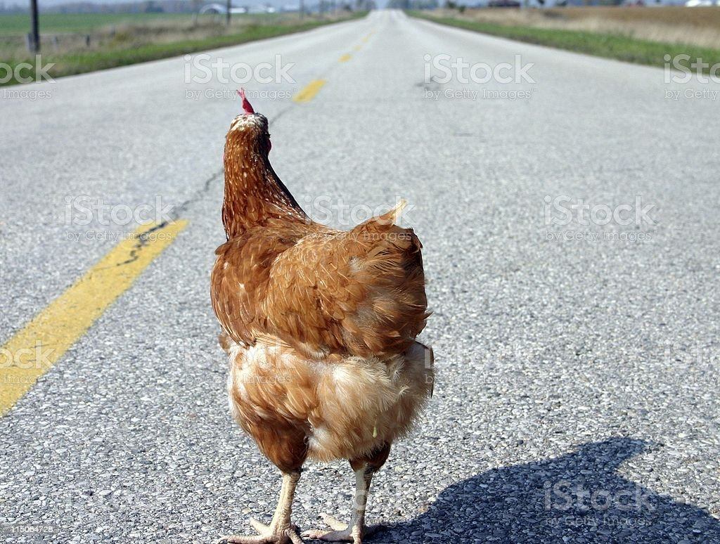 why did the chicken cross the road 0 stock photo more pictures of